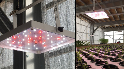 Grow Spectrum Light w/ EMS